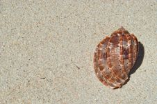 Free Beach Sand, Sea Shell Close-up Stock Images - 5324934