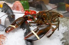 Free Lobster, A Various Fish On An Ice, Pepper Stock Photos - 5325533