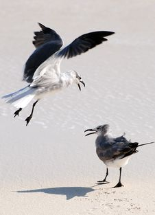 Free Two Seagulls On A Beach Stock Image - 5326631