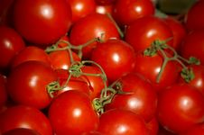 Free Fresh Ripe Tomatoes Stock Images - 5326884