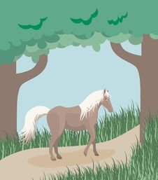 Free Horse On A Forest Path Stock Photo - 5327550