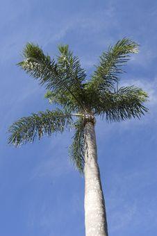 Free Palm Tree Stock Photo - 5327600