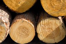 Free Close-up Logs Royalty Free Stock Images - 5328059