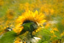Free The Sunflower Stock Photo - 5329090