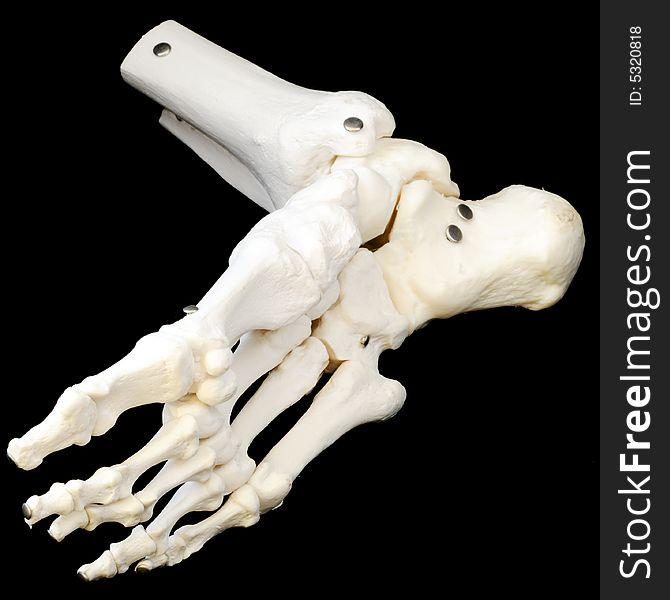 Underside Of Foot Skeleton - Free Stock Images & Photos - 5320818 ...