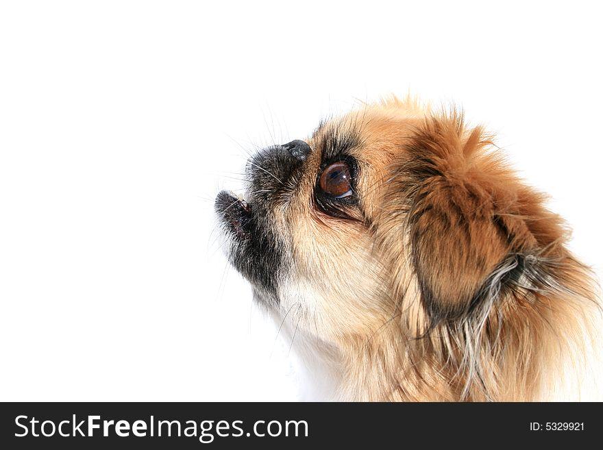 Dog surprised