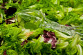 Free Fresh Organic Greens And Plastic Salad Tongs Royalty Free Stock Photography - 5332067