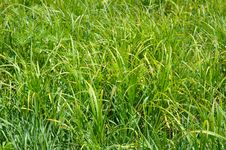 Free Green Grass Background. Stock Photo - 5331440