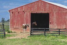 Free Horse Barn Royalty Free Stock Photo - 5331595