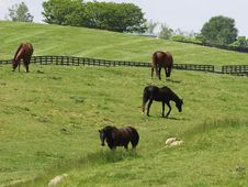 Free Horses In Field Stock Image - 5331661