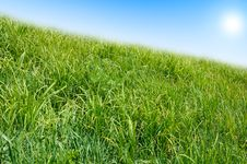 Free Green Grass And Blue Sky Background. Stock Photos - 5331673