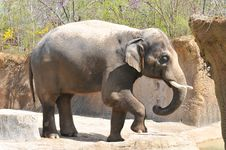 Free Elephant Playing With Dirt Stock Photography - 5332212