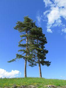 Free Tree In Tirol Stock Photography - 5332982