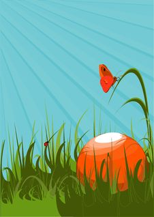 Free Orange Ball On A Green Grass Stock Photos - 5333473