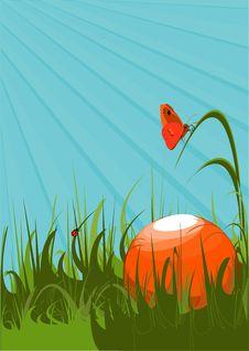 Orange Ball On A Green Grass Stock Photos