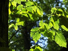 Free Leaves And Trunk Stock Photo - 5333850