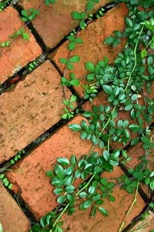 Free Ivy In Brick Royalty Free Stock Photos - 5334318