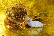 Yellow Mouse Stock Photos