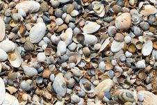 Free Muschelfeld Royalty Free Stock Photos - 5335308