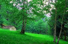 Free House In The Meadow Royalty Free Stock Photos - 5335588