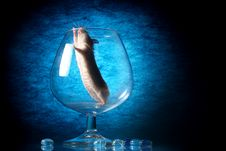 Free Mouse In Glass Stock Photos - 5335623