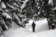 Free Trekking In The Alps Stock Photo - 5336650