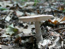 Free Mushroom Stock Image - 5336771