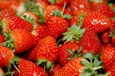 Free Strawberry Royalty Free Stock Images - 5337079