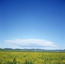 Free Sunny Day With Blue Sky And Yellow Flower Royalty Free Stock Photography - 5337807