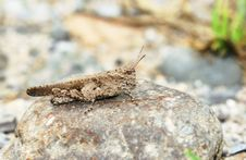 Free Grasshopper Stock Image - 5338701
