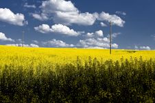 Free Yellow Flowers Field Stock Image - 5339041
