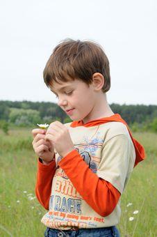 Free Boy And Chamomile Stock Image - 5339071