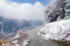 Trees And Road In Blue Fog At Mountain Tien Shan Royalty Free Stock Image