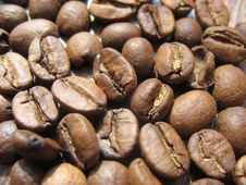 Free Grains Of Natural Coffee Royalty Free Stock Photos - 53359458