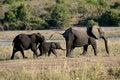 Free Elephant Procession Stock Photography - 5345152