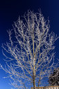 Free Frozen Tree Stock Photography - 5345202