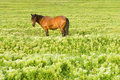Free Green Field With Horse Royalty Free Stock Images - 5346989