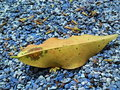 Free Exotic Leaf Royalty Free Stock Photography - 5348047
