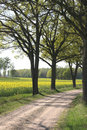 Free Tree Alley Royalty Free Stock Photography - 5349887