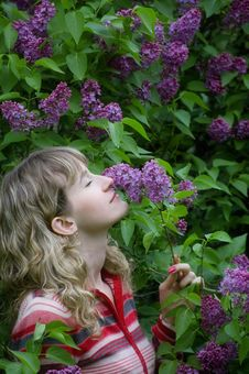 Free The Girl Smells A Lilac Stock Photography - 5340292