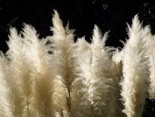 Free Fluffy Leaves Royalty Free Stock Photos - 5340578