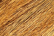 Free Broom Texture. Stock Photo - 5340750