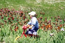 Girl Ridin A Bicycle In The Irises Meadow Royalty Free Stock Photo