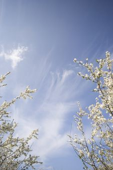 Free Spring Sky Background Royalty Free Stock Image - 5340916