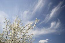 Free Spring Sky Background Stock Photo - 5340920