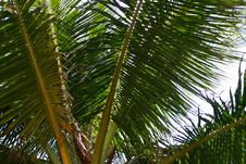 Free Palm Leaves Stock Image - 5341541
