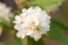 Free Bird Cherry Blossom Stock Photography - 5342732