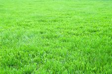 Free Grass Field Stock Image - 5343011