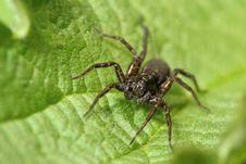 Dark Spider Stock Image