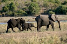 Free Elephant Procession Stock Photography - 5345152